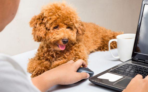 La mascota, nueva compañera en la oficina