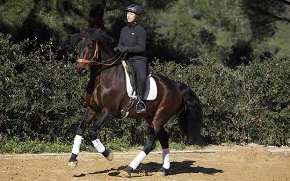 """Horseway: """"Queremos aportar bienestar a los caballos y a las personas, porque la sociedad necesita más conexión"""""""